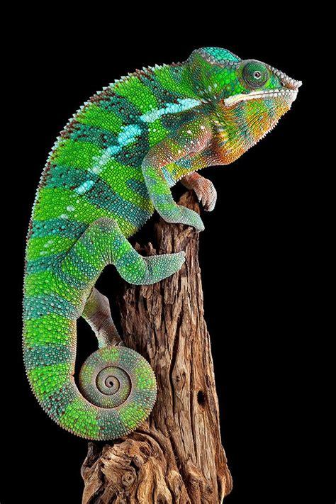 Schönste Farbe Der Welt by Die 24 Sch 246 Nsten Tiere Der Welt