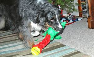 What Makes a Dog Go Crazy for One Toy Over Another?