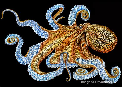 what color is an octopus tim jeffs