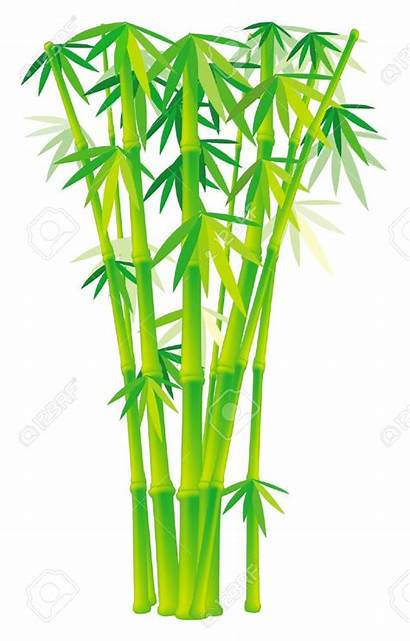 Bamboo Clipart Plants Tree Stalks Clipground Related