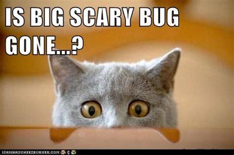 Bug Memes - whats your phobia girlsaskguys