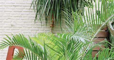 Die Schönsten Palmen Für Den Wintergarten