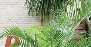 Palmen Für Den Garten : die sch nsten palmen f r den wintergarten mein sch ner garten ~ Sanjose-hotels-ca.com Haus und Dekorationen