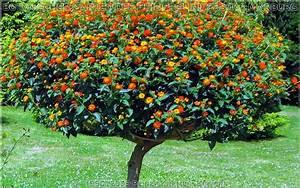 Schöne Bäume Für Garten : botanischer garten der philipps universit t marburg seit 1527 arboretum seltene b ume ~ Eleganceandgraceweddings.com Haus und Dekorationen