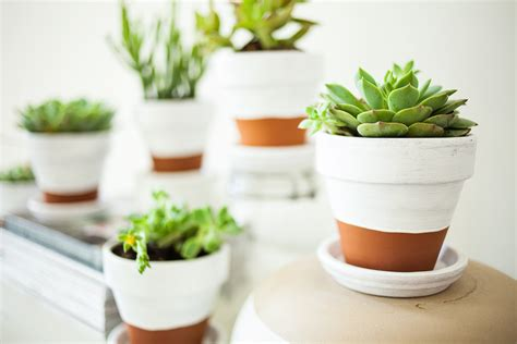 how to care for succulents in pots painted pots succulents