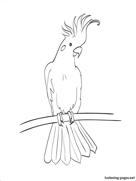 coloring page cockatoo coloring pages