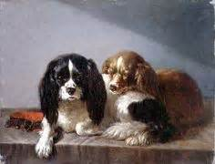 cavalier king charles images  pinterest