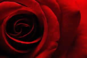 burgundy roses フリー画像 花 フラワー 薔薇 バラ レッド 花 赤色 レッド フリー素材 gatag