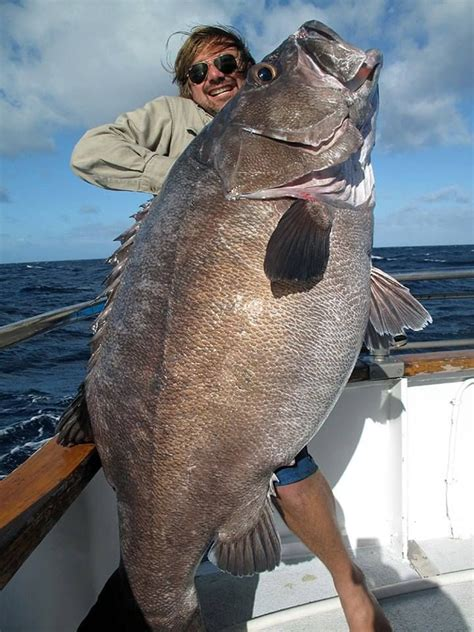 grouper goliath fish caught bass catch giant fishing sea monster boat river monsters imgur story thats boy