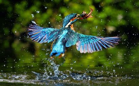 Birds Beautiful Best Desktop Hd Wallpaper Free Birds