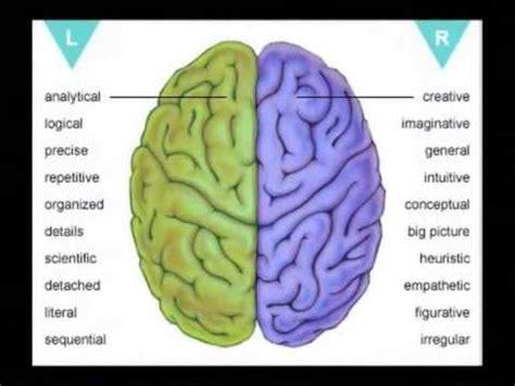 left brain   brain education youtube