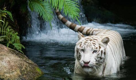 Nature Animals Images