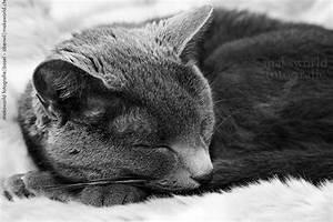Schwarz Weiß Bilder Tiere : katzen neues bildmaterial schwarz weiss maksworld fotografie basel oberwil ~ Markanthonyermac.com Haus und Dekorationen