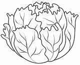 Lettuce Coloring Frutas Lechuga Colorear Dibujos Coliflor Fruits Vegetables Legumes Colorir Imprimir Desenhos Paginas Leek Libri Riscos Vegetable Alimentos Criancas sketch template