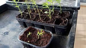 Aprikosenbaum Selber Ziehen : pfirsichbaum selber ziehen teil 3 angewachsene pfirsichb umchen youtube ~ A.2002-acura-tl-radio.info Haus und Dekorationen