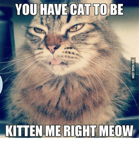 Meow Meme - you have cat to be kitten me right meow meow meme on sizzle