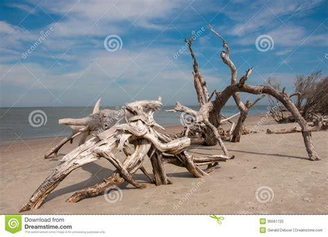 driftwood  folly beach stock image image  water