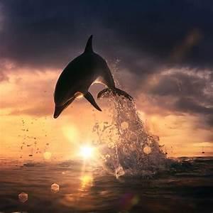 Schöne Delfin Bilder : 1001 ideen zum thema sch ne delfine bilder lifestyle lifestyle decor ideas ~ Frokenaadalensverden.com Haus und Dekorationen