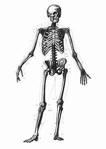File Skeleton Diagram Svg