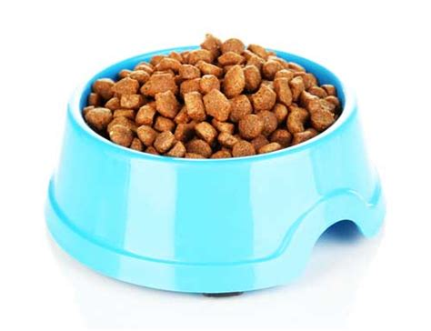 top   cheap dog food bowls   safe toxin