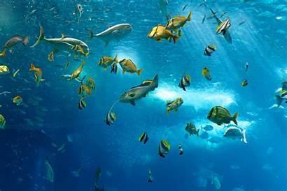 Underwater Fish Tropical Fishes Sea Ocean Reef
