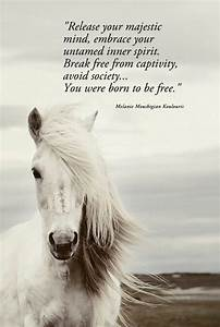 Positive & Insp... Free Horses Quotes