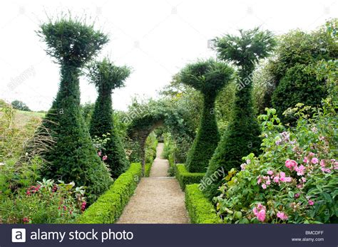 yew gardens rose garden with yew trees at hanham court gardens cotswolds uk stock photo royalty free