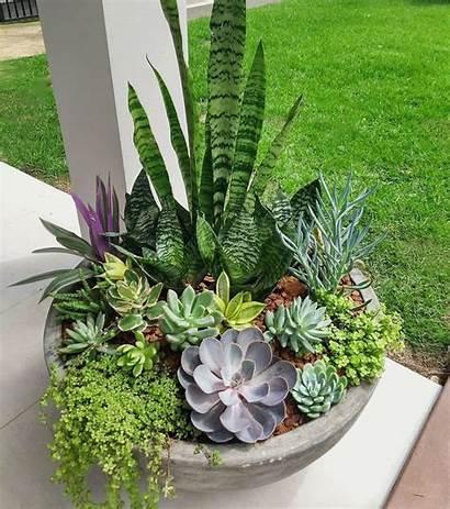Plantas Pindes Horr Guardado Desde Suculentas