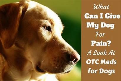 Dogs Pain Dog Give Aspirin Acetaminophen Dosage