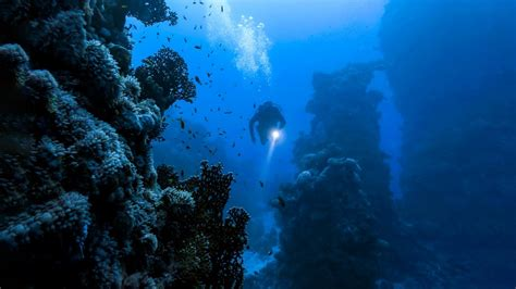 strangest  people   underwater