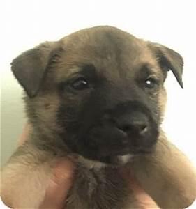Sarge | Adopted Puppy | Sarge12012015 | Atlanta, GA ...