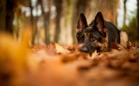 Fall Wallpaper With Animals - fall with animal background wallpapers 4115 amazing