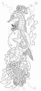 Adult Coloring Seahorse Printable Detailed Adults Sea Horse Ocean Advanced Seashell Shells Drawing Template Stress Colouring sketch template