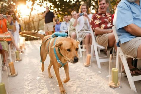 awesome ways to include your dog your big day barkpost
