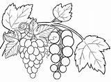 Coloring Pages Fruits Grapes Fruit Copy Grape Preschool Six Children Fun sketch template