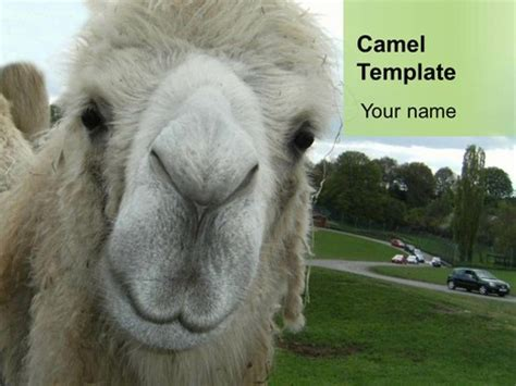 camel powerpoint template