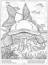 Coloring River Pages Catfish Fish Mississippi Freshwater Habitat Getcolorings Getdrawings Ocean Printable sketch template