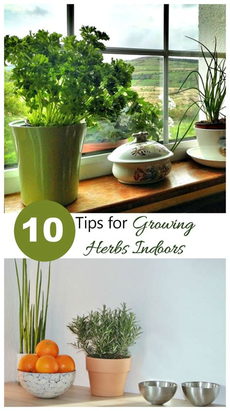 Growing Herbs Inside by Growing Herbs Indoors How To Grow Herb Plants Indoors Inside