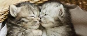 Katzen Fernhalten Von Möbeln : an alle heuchler die sich aufregen wenn jemand katzen isst ~ Sanjose-hotels-ca.com Haus und Dekorationen