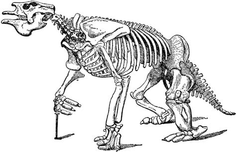 full megatherium fossil skeleton clipart