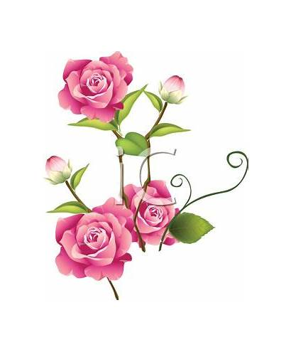 Roses Clip Pink Rose Clipart Flower Bud