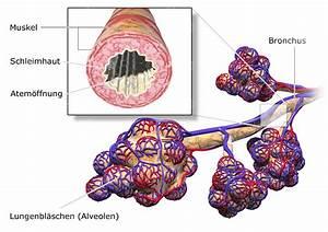 Nutzungsrechte Illustration Berechnen : illustration bronchien und alveolen der lunge ~ Themetempest.com Abrechnung