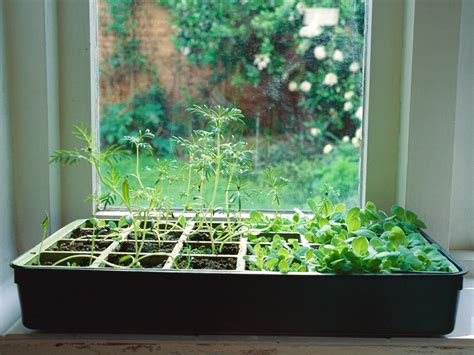 Herb Garden Indoor : How To Grow An Indoor Herb Garden