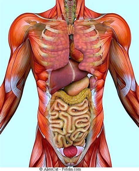 Bauchschmerzen ohne durchfall
