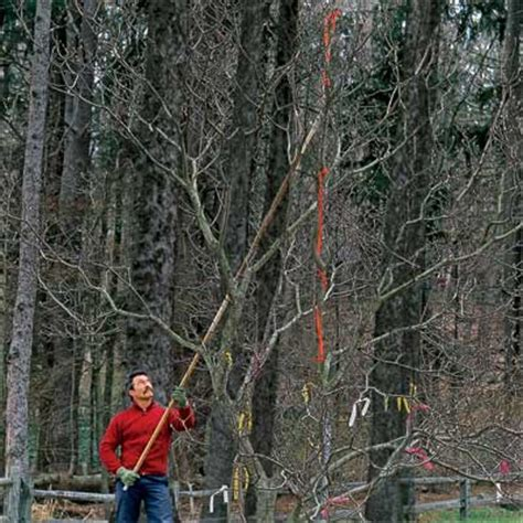 how to prune ornamental cherry trees how to prune small ornamental trees everything you need to know about pruning and dividing