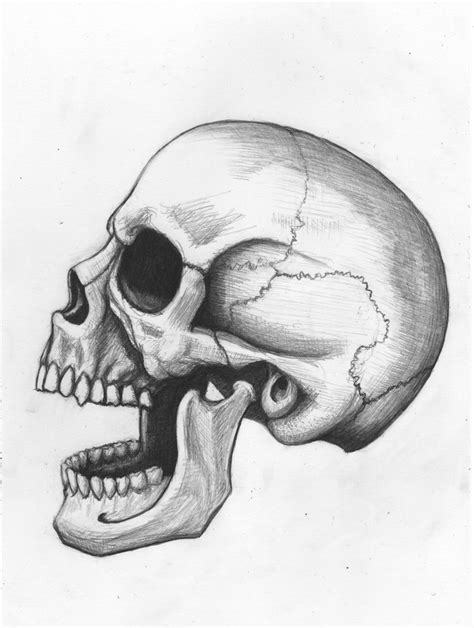 Human Skull Pencil Drawing Graphite Bristol