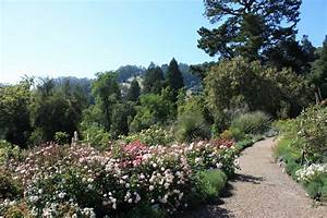Panoramio photo of uc berkeley botanical gardens rose garden for Berkeley botanical garden