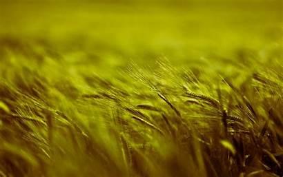 Barley Field Depth Grass Nature Plants Plant
