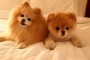 Worlds Cutest Dog Breed - Dog : Pet Photos Gallery#Gx3n1EY2JZ