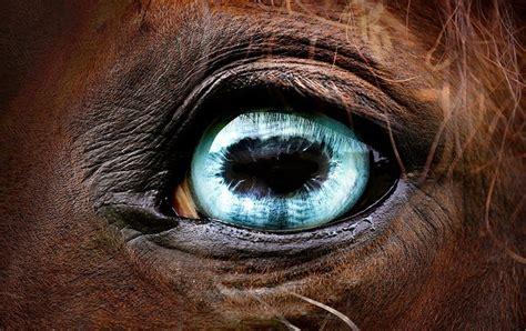 horse eye eyes horses eyed equine pretty equestrian quarter blind wall arabian different paint lovley light cool crazy emerald konie